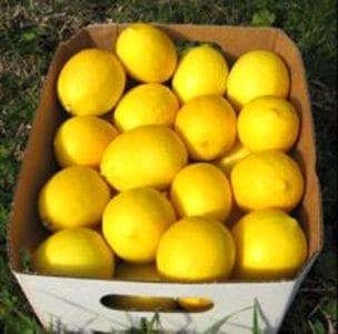 10-lemons-small-web