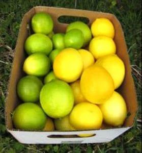 10-mixed-fruit-small-web