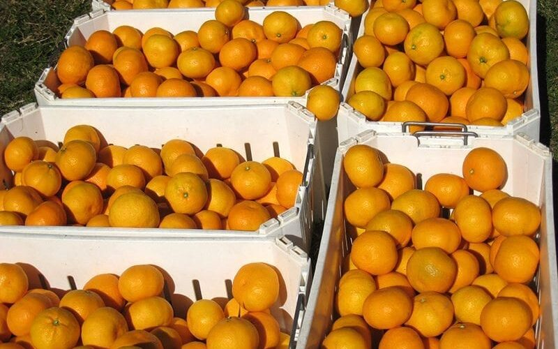 mandarins-product-large-web